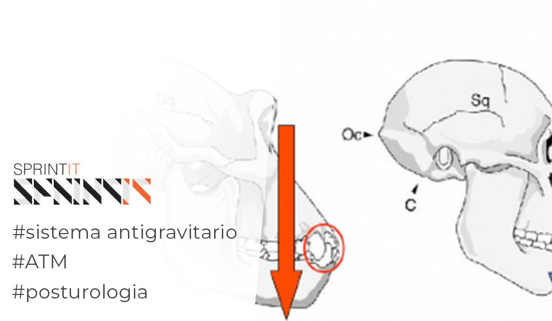 La relazione occluso-posturale: la lotta antigravitaria