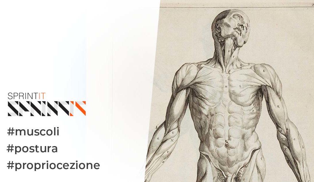 La propriocezione muscolare